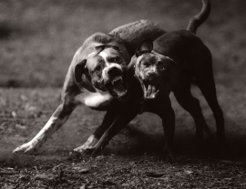 Michael Crouser, Dog run, 2008, Michael Crouser,
