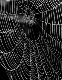 Arthur Lavine, Spider Web, Maine, 1947